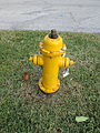 Deerfield Beach Jan2014 Hydrant 1.JPG