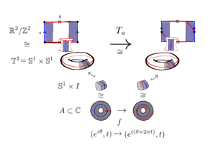 Dehn twist - An example of a Dehn twist on the torus, along the closed curve a, in blue, where a is an edge of the fundamental polygon representing the torus