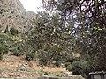 Delphi 059.jpg