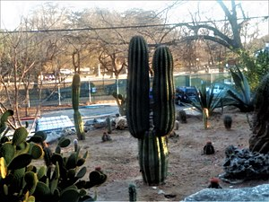 San Antonio Zoo - Desert plant and terrain exhibit at San Antonio Zoo