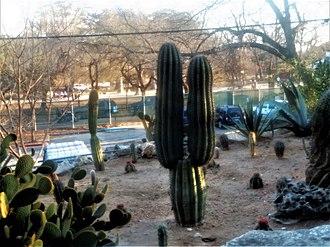 San Antonio Zoo - Desert plant and terrain exhibit at San Antonio Zoo