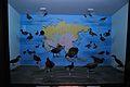 Diorama - Migratory Birds - Zoological Gallery - Indian Museum - Kolkata 2014-04-04 4372.JPG