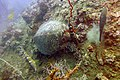 Diving Ko Tao, Thailand 1690.jpg