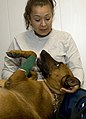 Dog dentistry 130814-F-WK680-019.jpg
