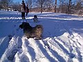 Dogs (4153260578).jpg