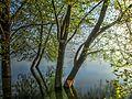 Dojran Lake 131.jpg