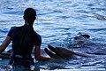 Dolphin Cove 61.jpg