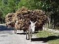 Donkeys Hauling Hay - En route from Samarkand to Shakhrisabz - Uzbekistan (7494205030).jpg