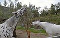 Dos cavalls a Catamarruc.JPG