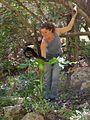 Dracunculus vulgaris-Groesse.jpg