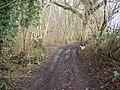 Drake's Lane - geograph.org.uk - 1150254.jpg