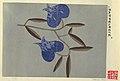 Drawing, Textile Design- Pappelrose (Hollyhock), 1911–16 (CH 18631195).jpg