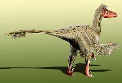 Croyez-vous en l'existence des extra-terrestres? - Page 20 250px-Dromaeosaurus_BW