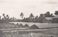 Drying-out station at Saipan Nanyoh Coffee corporation in 1932.png