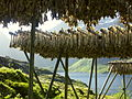 Drying cod in Å, Lofoten Islands.jpg