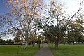 Dubbo NSW 2830, Australia - panoramio (48).jpg