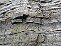 Dundee Limestone over Lucas Dolomite (Middle Devonian; Auglaize Quarry, near Junction, Ohio, USA) 16 (48888985741).jpg