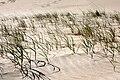 Dunes Beach - 11 (3468261050).jpg