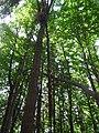 Dva stromy, Ondřejovsko.jpg