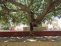 Dwaraka and around - during Dwaraka DWARASPDB 2015 (247).jpg