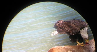 Chilkoot Lake - Image: Eagle cited through a telescope near Chilkoot lake