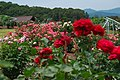 Echigo Hillside Park - Rose Garden.jpg