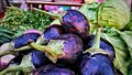 Eggplant Pakistan local.jpg