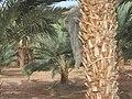 Eilat Birdatching Center 03.jpg