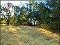 El Dorado Hills 982 - panoramio.jpg