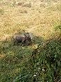 Elephantchitwan.jpg