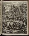 Elephantographia Curiosa 167.jpg