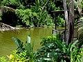 Embalse Dos Bocas de Utuado, Puerto Rico - panoramio (4).jpg