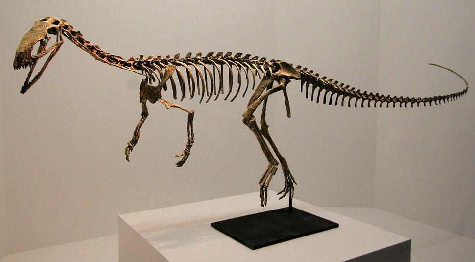 Eodromaeus murphi
