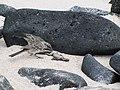 Espanola - Hood - Galapagos Islands - Ecuador (4870955015).jpg