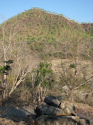 Eucalyptus alba woodland and tropical dry forest along Vemasse River near Uaigae, Vemasse, Baucau, Timor-Leste.jpg