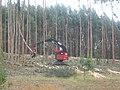 Eucalyptus pulpwood harvest.jpg