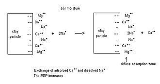 Alkali soil - Sodium exchange process between ions adsorbed at the surface of clay particles and those in the soil moisture