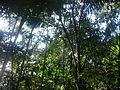 Explorando a floresta amazonica, Brasil.JPG