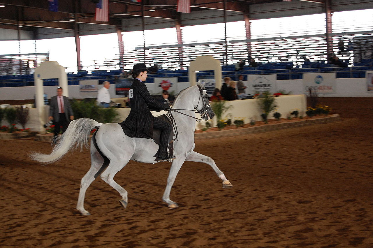 how to ask for extended trot