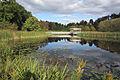 F.R. Newman Arboretum, Cornell University.jpg