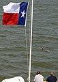 FEMA - 38593 - Dolphins swim in Inter Coastal Waterway.jpg