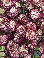 FLOWERs-33.jpg