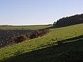 Fairmile Down - geograph.org.uk - 274239.jpg