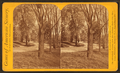 Fairmount Park. Carriage road to Lemon Hill, by Purviance, W. T. (William T.).png
