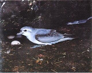 Port Davey Islands Important Bird Area