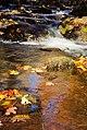 Fall Colors (181697143).jpeg