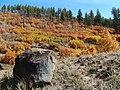 Fall Colors Santa Fe NF (22519417845).jpg