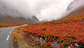 Fall Colours, along Route 63, Norway.jpg
