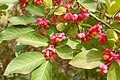 Fall flowers (265940805).jpg