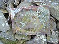 Fallen Currick - geograph.org.uk - 1321835.jpg